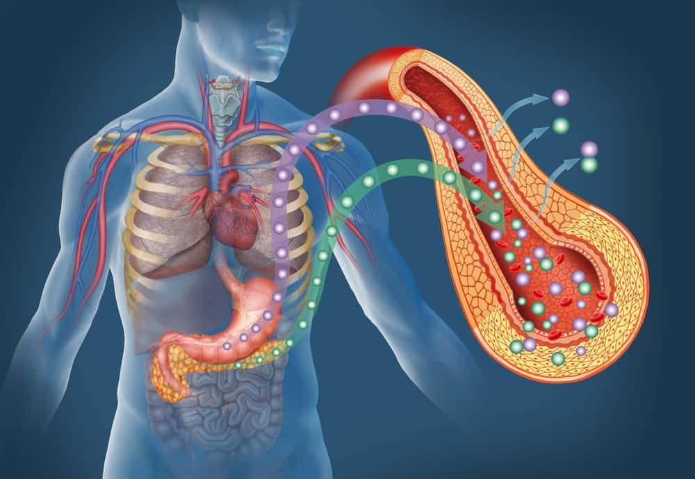 Heart Disease: A Study Conducted By The American Heart Association  Discovered That Subjects With Two Copies Of The MTHFR Mutation Experienced  An Increased ...