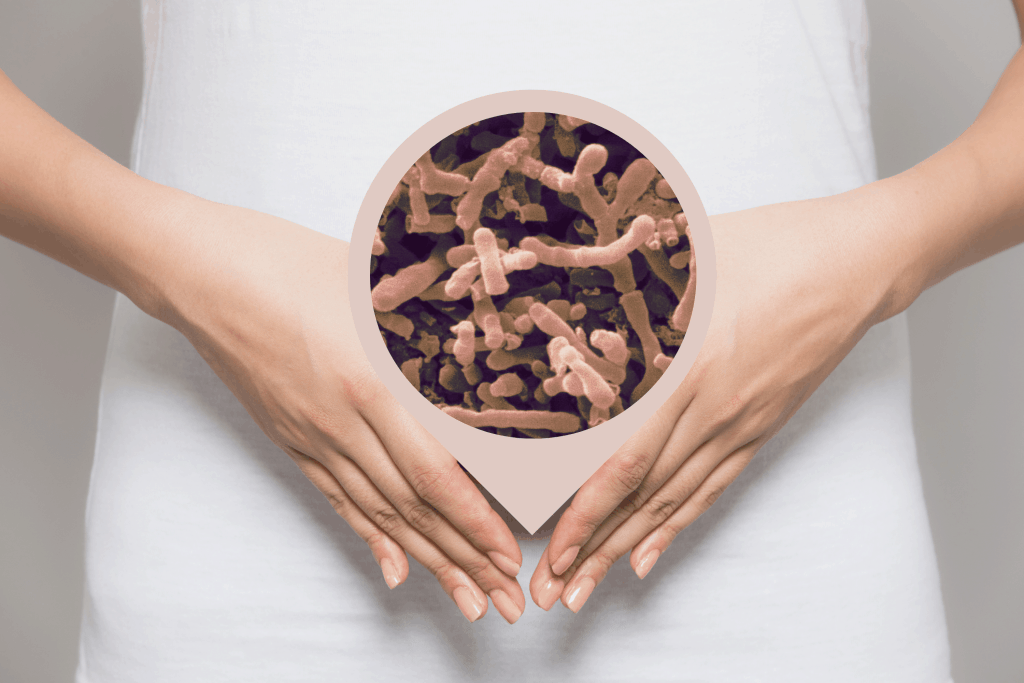 Bifidobacterium longum-Benefits of This Powerful Probiotic Bacteria