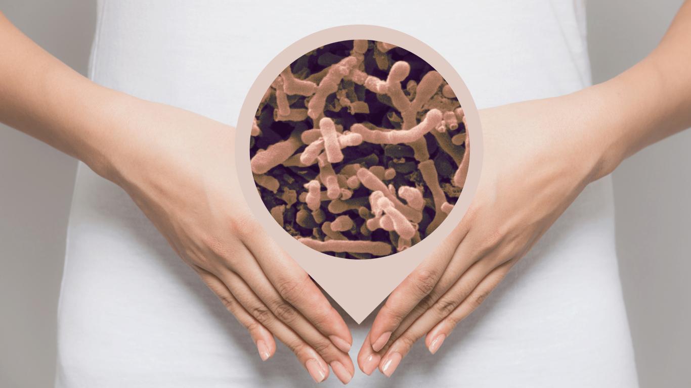 Bifidobacterium longum-Benefits of This Powerful Probiotic Bacteria