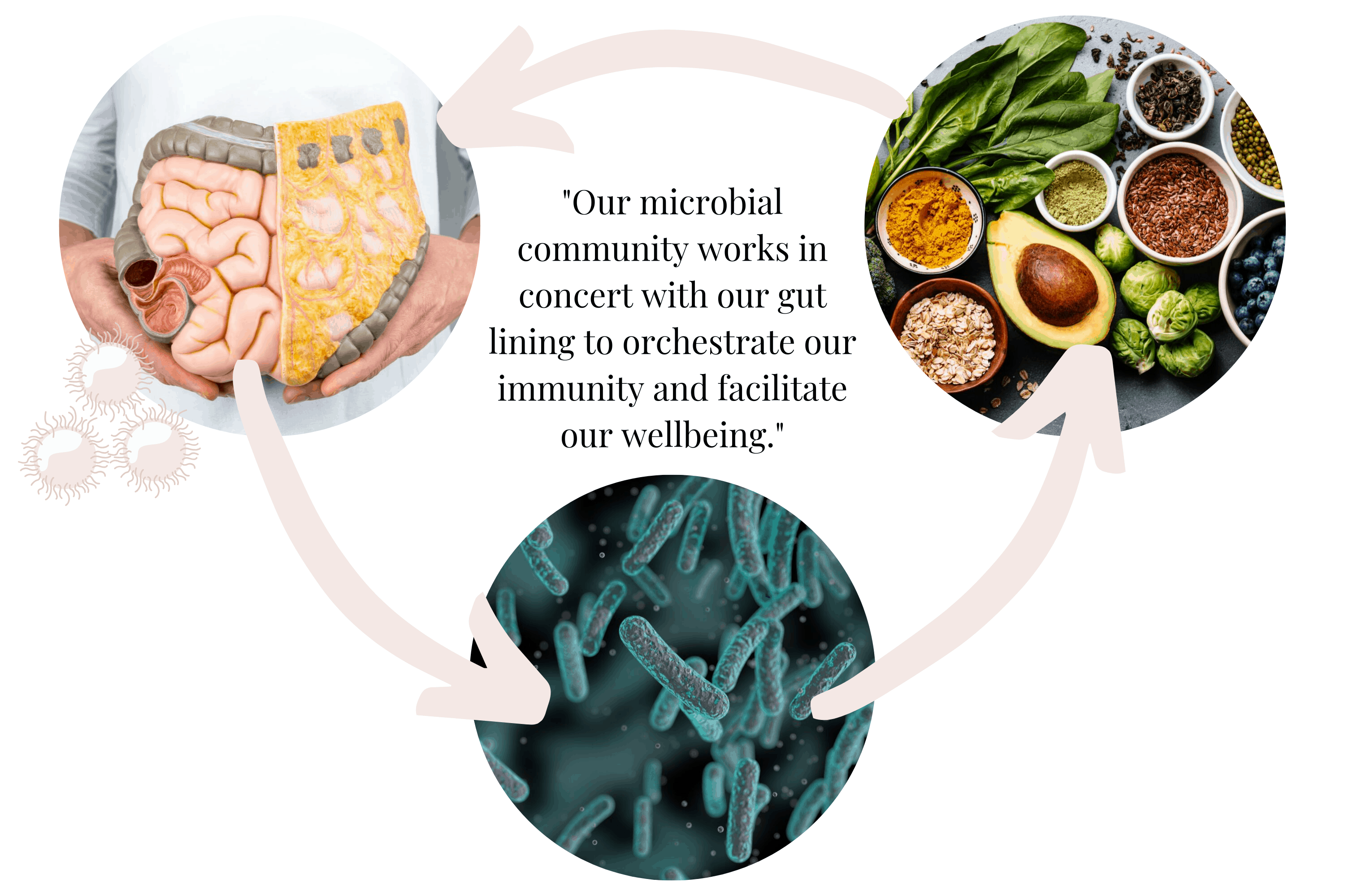 Gut-Immune System Connection
